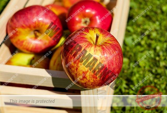 apple type
