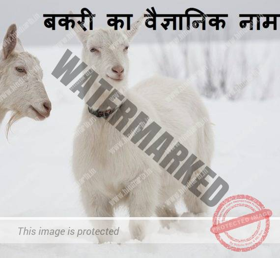 बकरी का वैज्ञानिक नाम scientific name of goat
