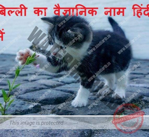 बिल्ली का वैज्ञानिक नाम scientific name of cat