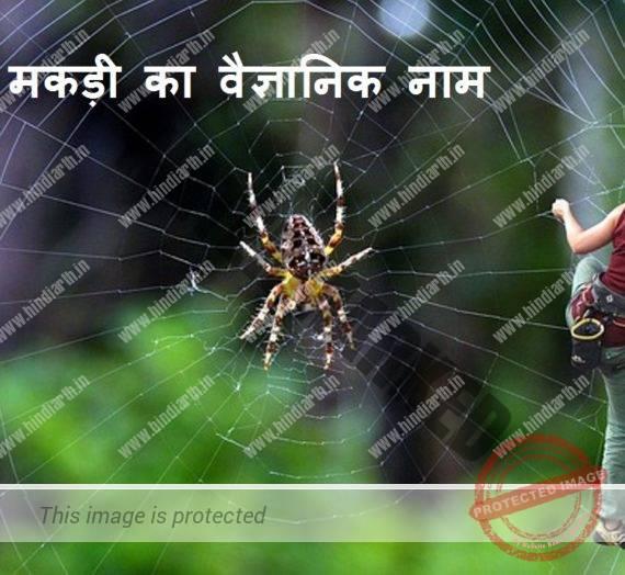 मकड़ी का वैज्ञानिक नाम spider scientific name