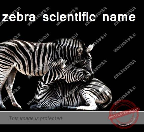जेब्रा का वैज्ञानिक नाम  zebra scientific name