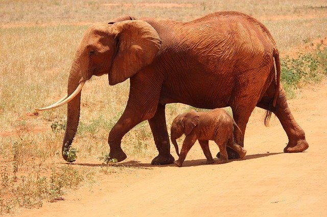हाथी का वैज्ञानिक नाम क्या होता है