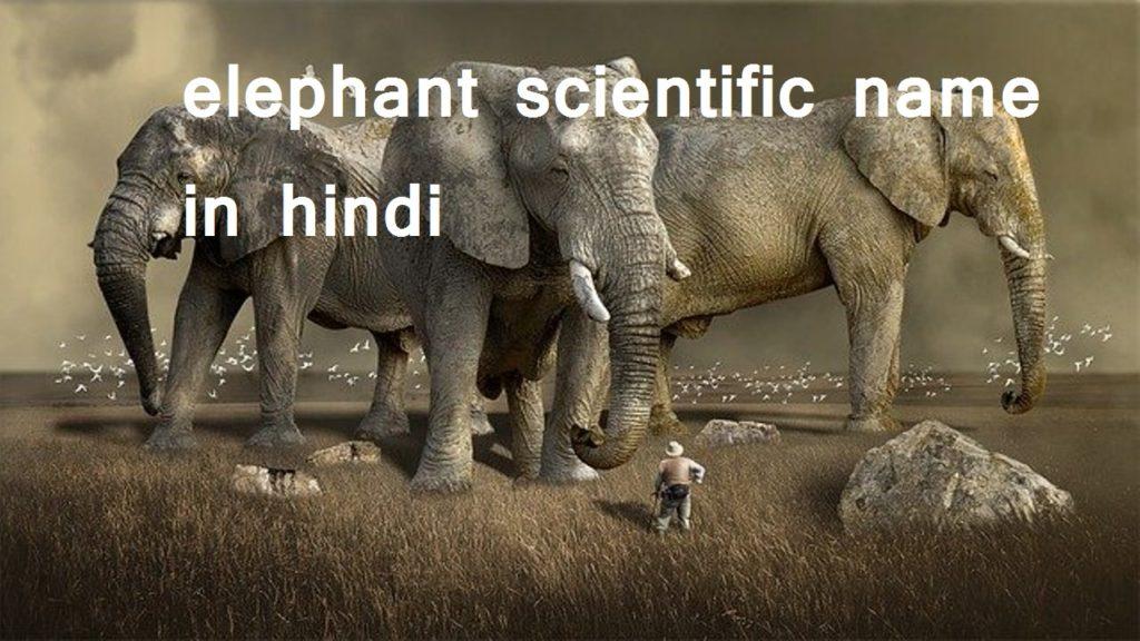 हाथी का वैज्ञानिक नाम