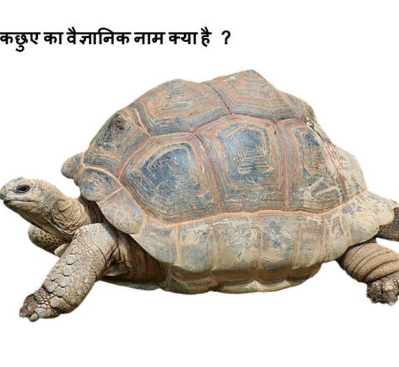 कछुए का वैज्ञानिक नाम क्या है ? kachua ka vaigyanik naam